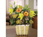 Let The Sunshine In (Gerberas,Daisies)
