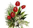 Elegant (Anthuriums, Orchids)