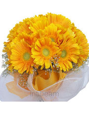 Gerbera Magical Bunch
