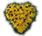 Bunch of Fresh Yellow Roses Cupid Heart Gift 213