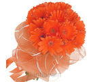 Orange Gerbara Bunch (Gerberas)