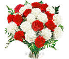 Red & White Carnations Bunch (Carnations)
