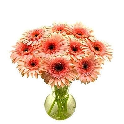 Natural Bunch of Gerberas in Glass Vase Flower 257