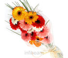 Mixed Geberas Bunch (Gerberas)