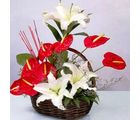 Anthurium Pride (Anthuriums, Lilies)