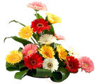 Mixed Gerbera Basket (Gerberas)