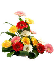 Mixed Gerbera Basket