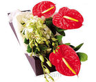Anthurium with Orchid Bunch (Anthuriums, Orchids)