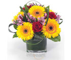 Sunflower Fields (Gerberas,Roses)