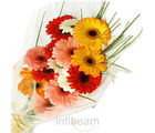 Mixed Gerberas Bunch (Gerberas)