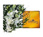 12 White Orchids & Cadbury Celebration Flower 188