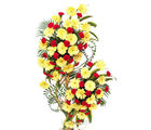 Grebera & Carnation Arrangement (Gerberas, Carnations)