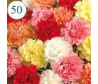 50 Mix color Carnations - 50MC
