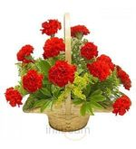 Red Carnation (Carnations)