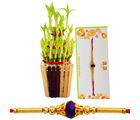 Wish Your Bro Good Luck On This Rakhi - GAIBHR32, rakhi with imported chocolate tray