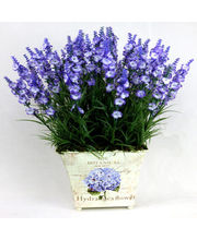 Flowers Boutique Arrangement Of Silk Lavender In Designer Vase (Purple)