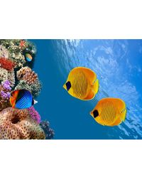 meSleep Fishes Canvas, multicolor