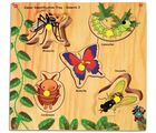 Skillo Junior Identification Tray (With Knobs) Insects I (Multicolor)